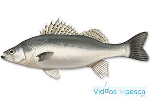cebos-pesca-libina-2