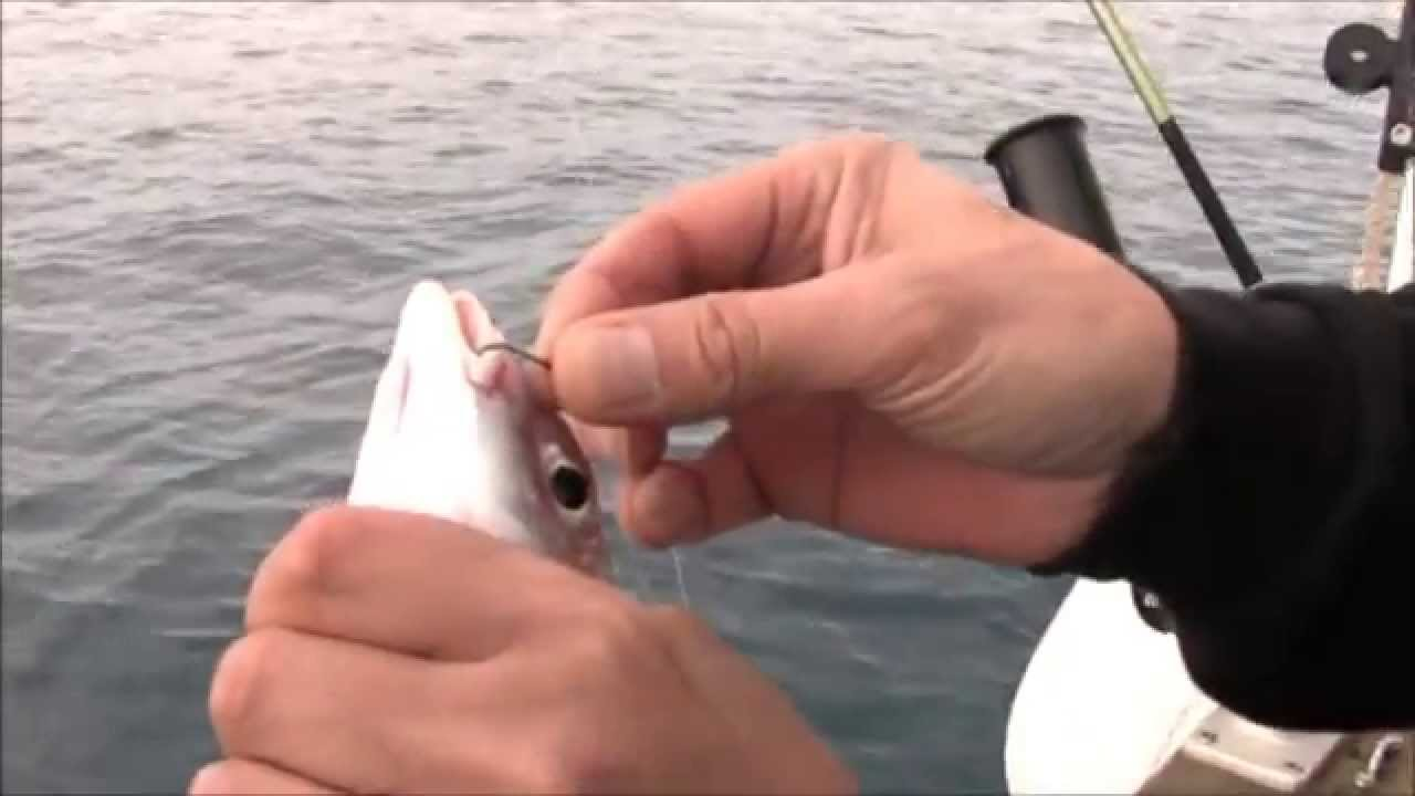 pesca volantin