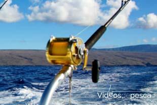 Videos de pesca