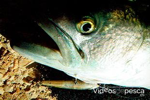 pesca-spinning-desde-costa