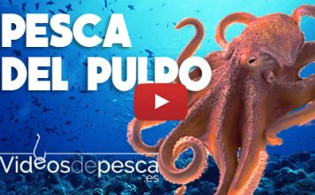 video de pesca del pulpo