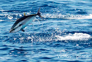 pesca-mediterraneo